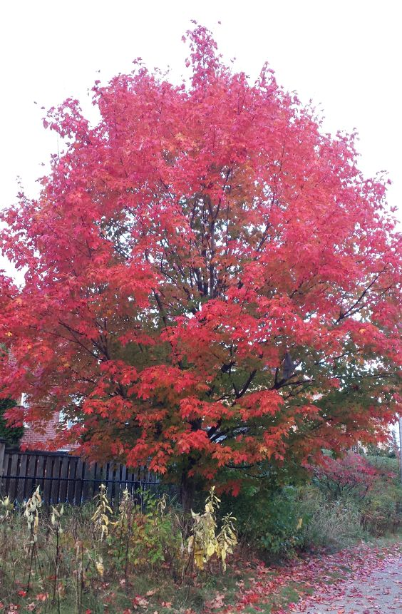 beautiful-fall-tree